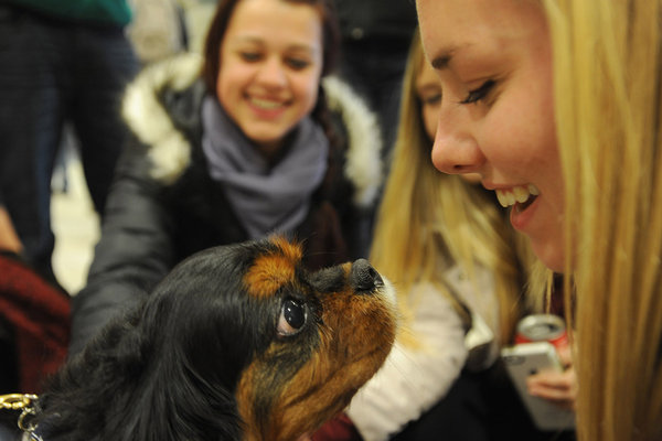 A therapy dog and a Kent State student take a close look at each other during the Stress-Free Zone event held in the lobby of the library.