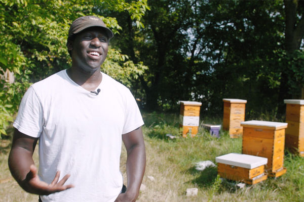 Kent State graduate Brent Ian Wesley raises bees in Akron's Highland Square neighborhood.
