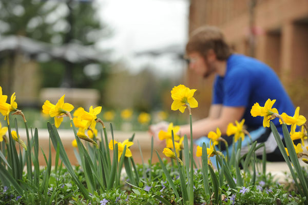 Photo of student studying with daffodils in the foreground.