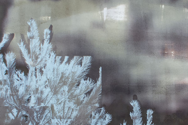Amanda Lee, visiting artist for Kent Blossom Art