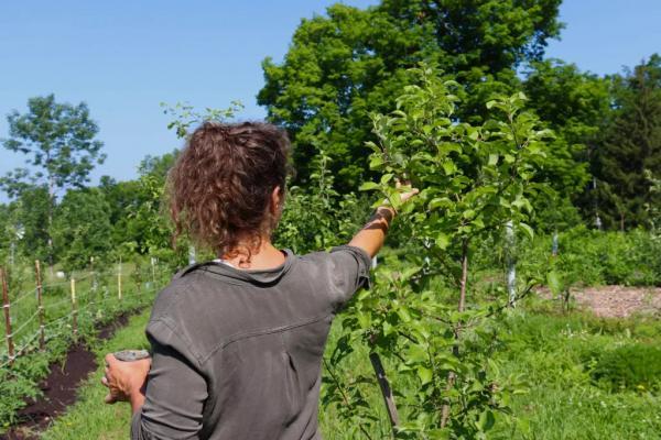 Ohio Organic Farmer in Field
