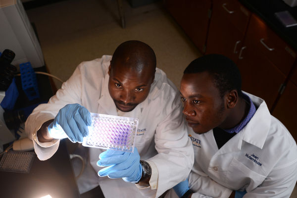 Dr. Jean Engohang-Ndong is a Professor of Biology