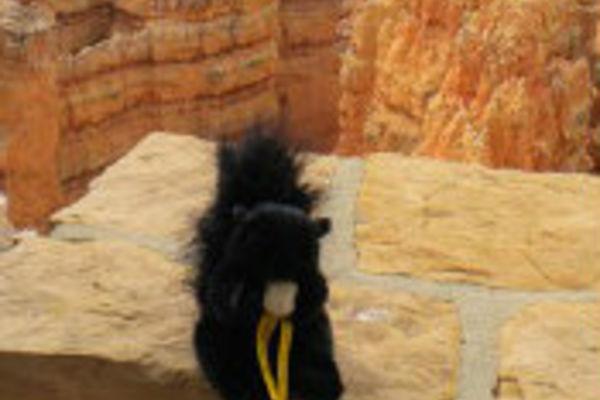 A black squirrel plush near a canyon