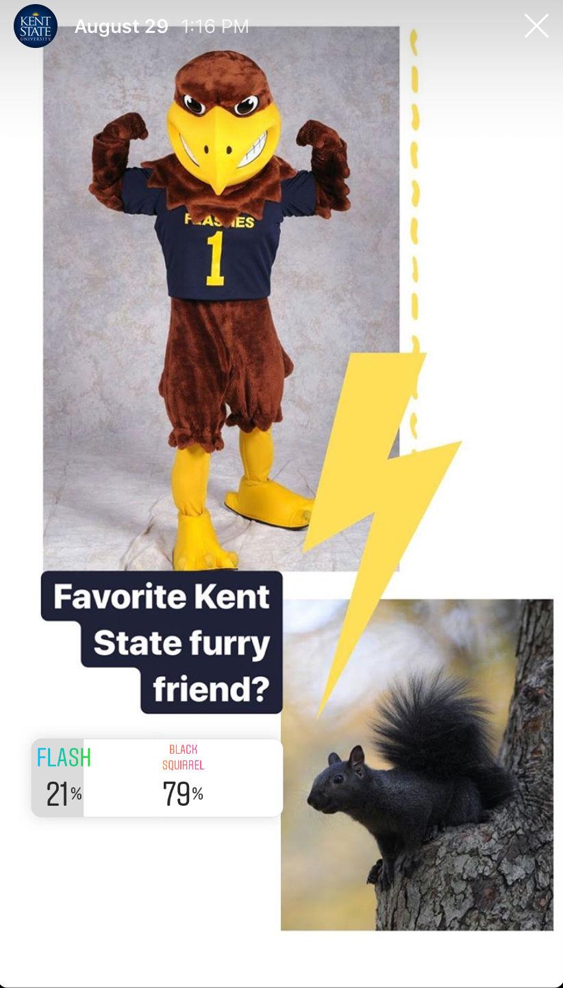 Mascot Flash vs. black squirrel