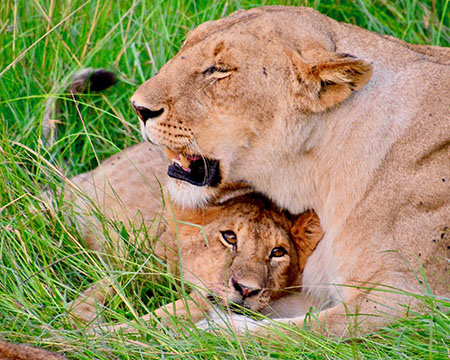 Pratim Datta, Ph.D., College of Business Administration, shot this photo in Masai Mara, Kenya.